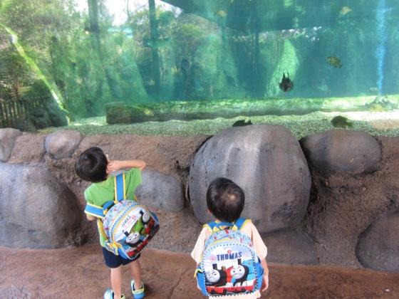 One of the many many fish tanks...